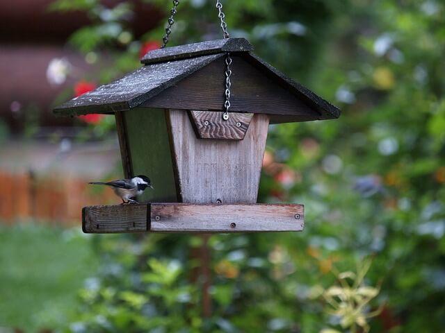 jak zrobić budkę dla ptaków